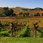 Vineyards_in_Napa_Valley_7_150