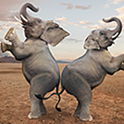 dancing-elephants - 150